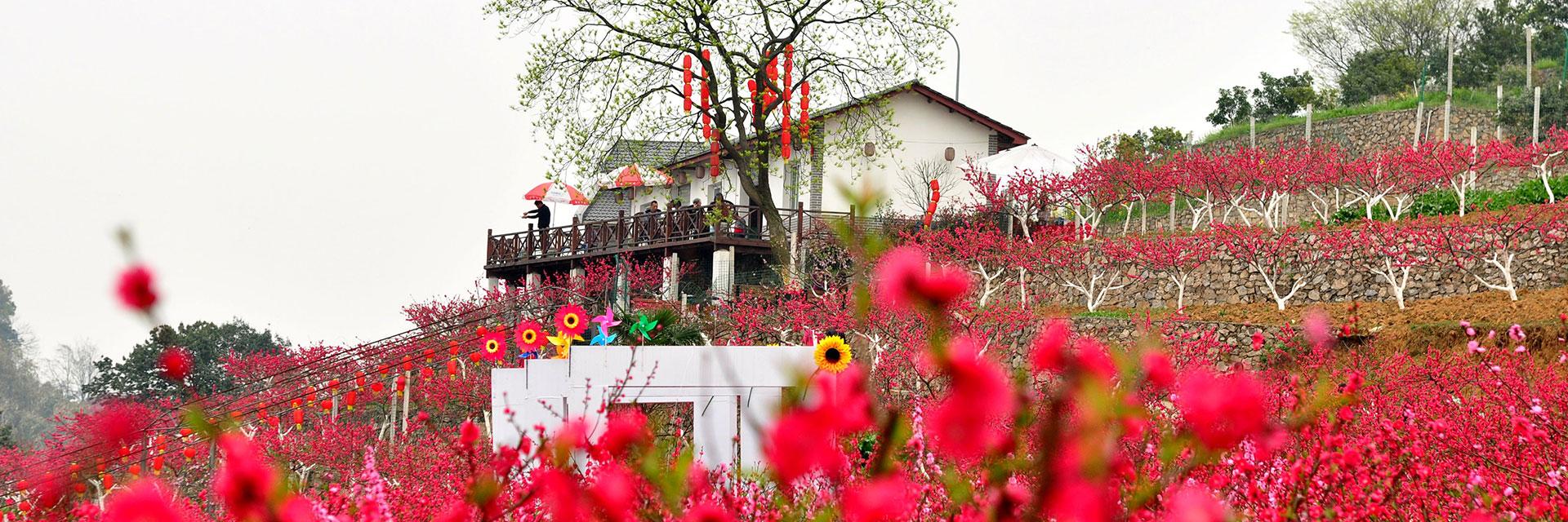 重庆市绿歌生态农业专业合作社